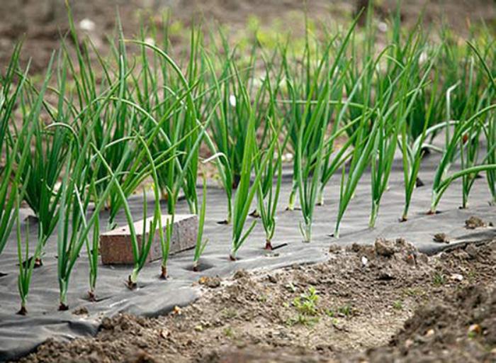 Спанбонд для сельского хозяйства
